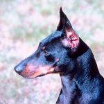 A healthy pet needs maintenance at Auburn Animal Hospital