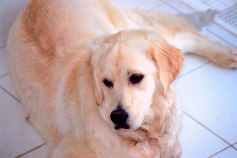 Older pet care for longer life at Auburn Animal Hospital