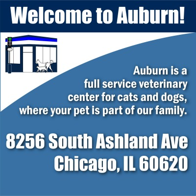 Auburn Animal is on the corner of Ashland and 83rd Street