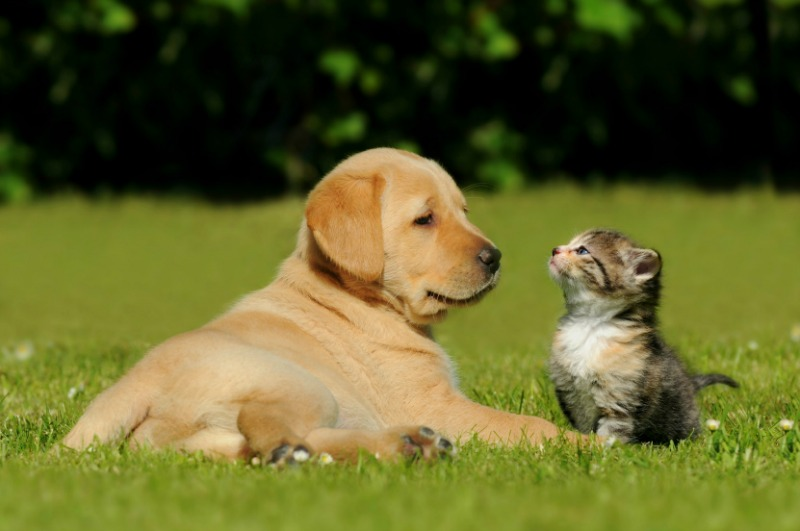 Annual Exam for your pet's future health and welfare