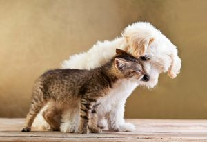 Heartworm and Intestinal Care for your pets