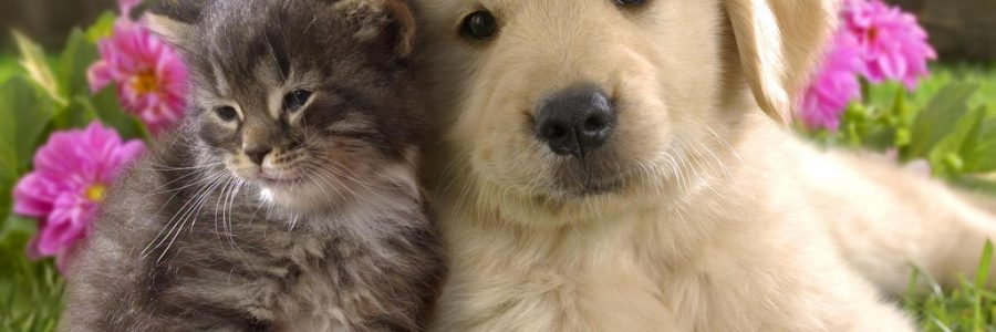Kitten and Puppy Petly Wellness