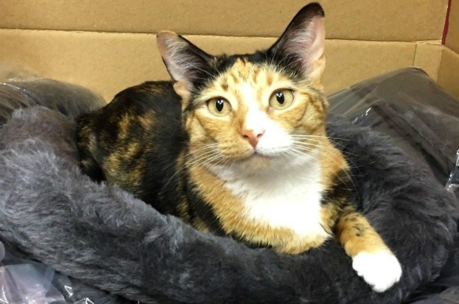 New pillows for cat hotels in for Auburn Animal Hospital