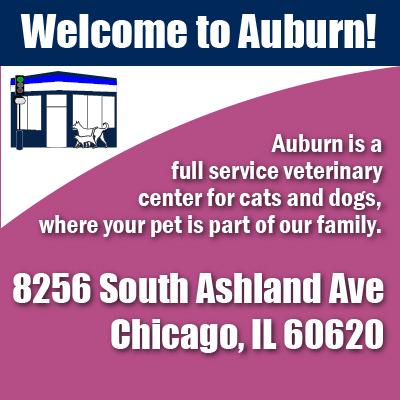 Best Pet Hospital in Auburn Gresham Chicago Illinois
